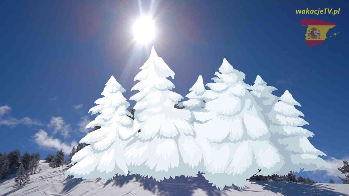 Hiszpania w styczniu - słońce i zasypane śniegiem drzewa