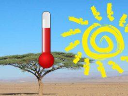 Temperatury i pogoda w Maroko - zdjęcie pustyni i drzewa