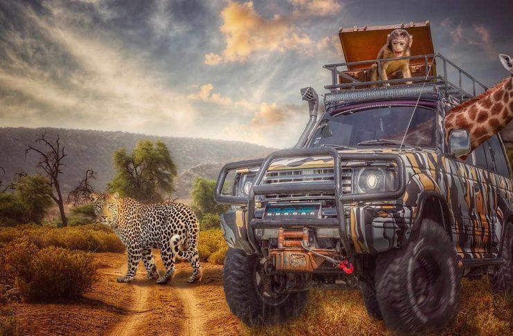 Afryka zwierzęta w samochodzie